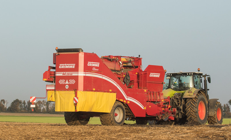 Claas Axion 810 with Grimme SE 150-60 in Ralshoven.