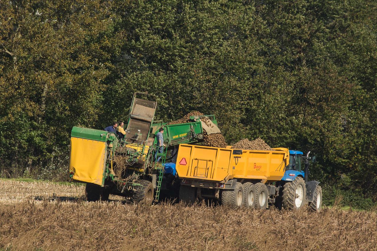 New Holland T7.270 with WM Kartoffeltechnik 8500 potato harvester in Remersdaal.