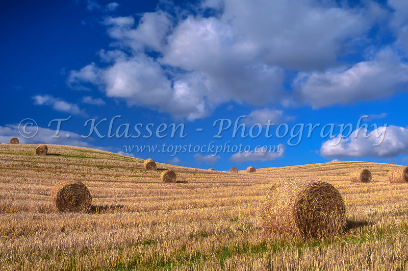 Round straw bales on a field near Bruxelles, Manitoba, Canada.