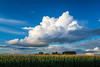 Dramatic clouds over a corn field near Winkler, Manitoba, Canada.