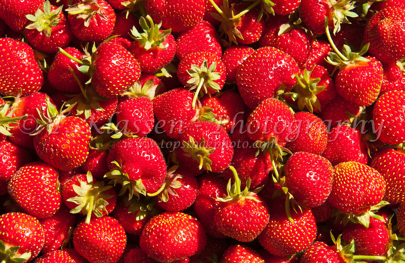Closeup of strawberries in a basket picked at a berry farm near Winnipeg, Manitoba, Canada.