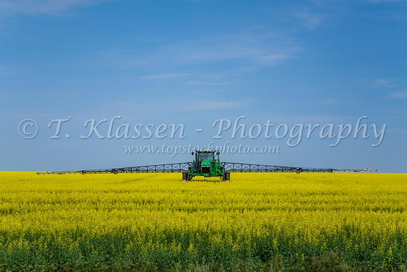 A chemical sprayer on a yellow canola field near St. Leon, Manitoba, Canada.