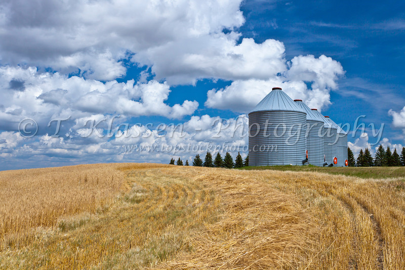 Grain storage bins on a farm near Notre Dame de Lourdes, Manitoba, Canada.