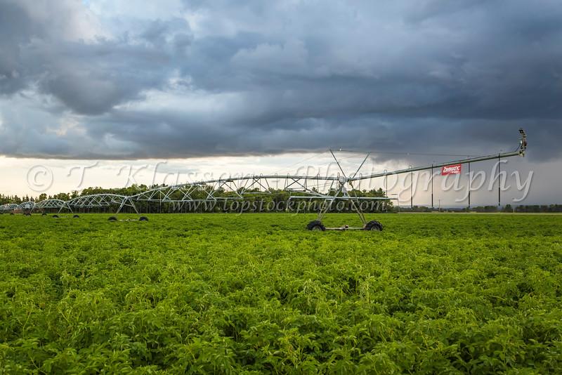 Circular irrigation equipment on a potato field near Winkler, Manitoba, Canada.