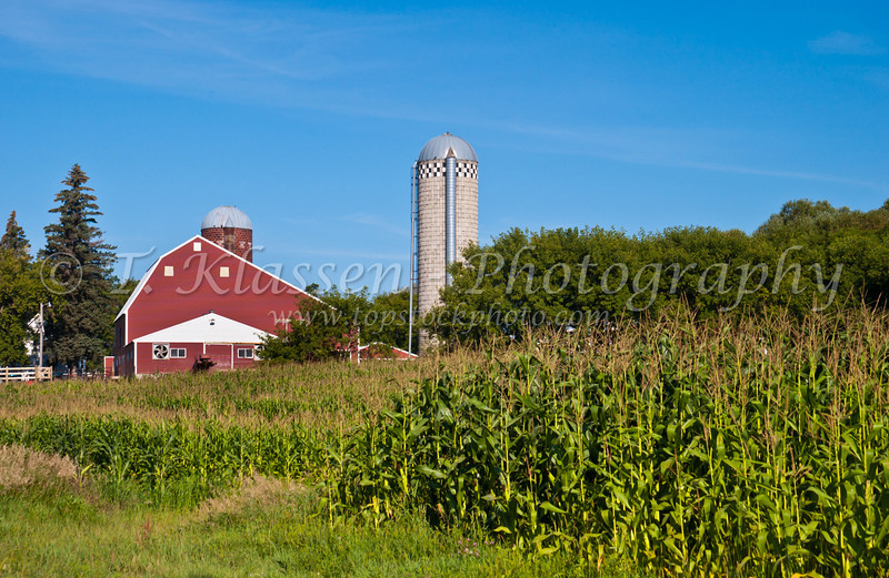A dairy farm and corn field in rural Minnesota near Alexandria, USA, America.