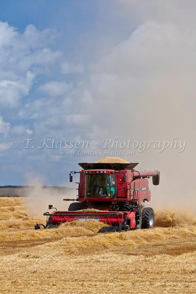 A combine harvesting grain near Notre Dame de Lourdes, Manitoba, Canada.