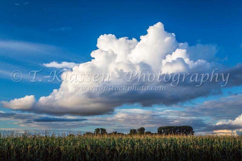 Dramatic clouds over a corn field near Winkler, Manitoba, Canada.