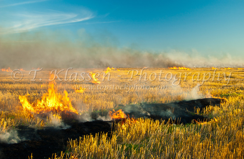 Stubble burning near St. Agathe, Manitoba, Canada.