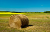 Yellow canola field with hay bales in rural southern,Manitoba, Canada.