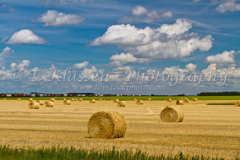 Round hay bales in a field near Bruxelles, Manitoba, Canada.