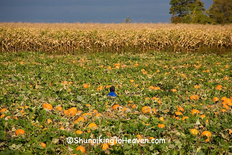 """Waiting for the Great Pumpkin"", Calumet County, Wisconsin"
