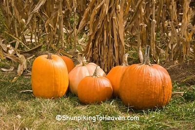 Pumpkins at Pumpkin Stand, Houston County, Minnesota