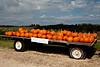 Wagonload of Pumpkins, West Ridge Orchard, Crawford County, Wisconsin