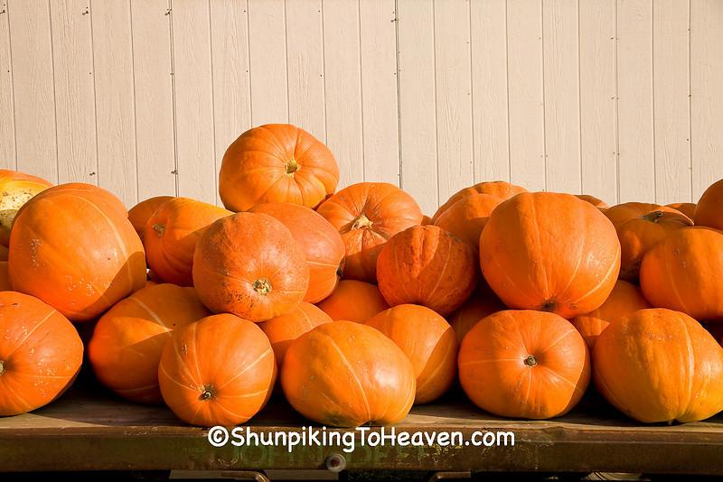 Load of Pumpkins, Allamakee County, Iowa