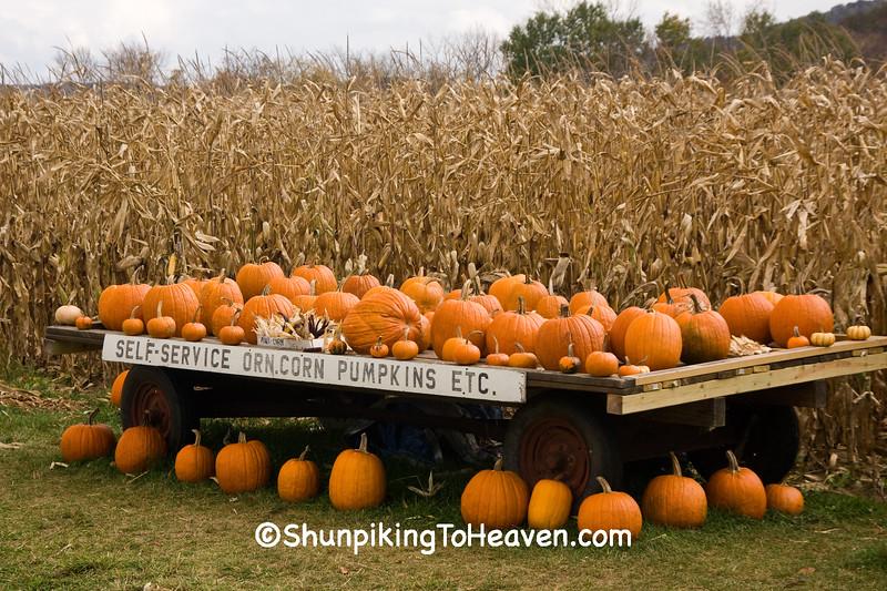 Pumpkin and Gourd Stand, Houston County, Minnesota