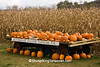 Pumpkin and Gourd Stand, Houston County, Minnesota