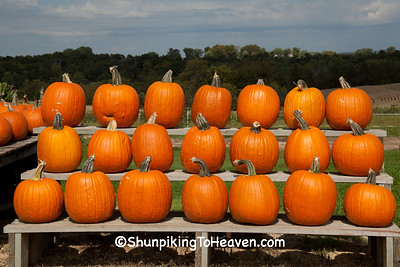 Pumpkins on Display, West Ridge Orchard, Crawford County, Wisconsin