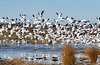 2-19 Rancho Llano Seco-9515