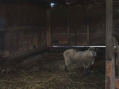 Livestock 04