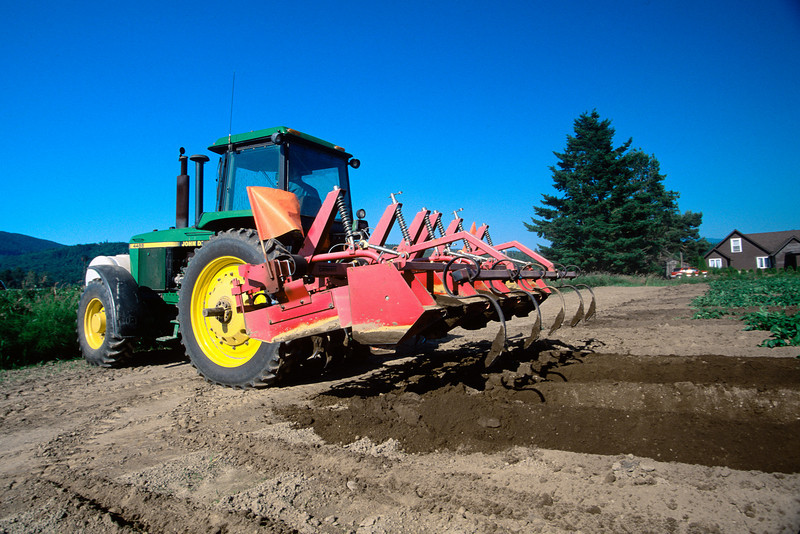 Hilling and cultivating potatoes