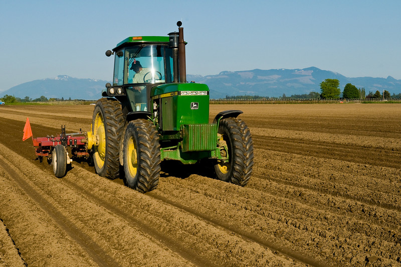 Cultivating the recently planted potato rows in Skagit County, WA