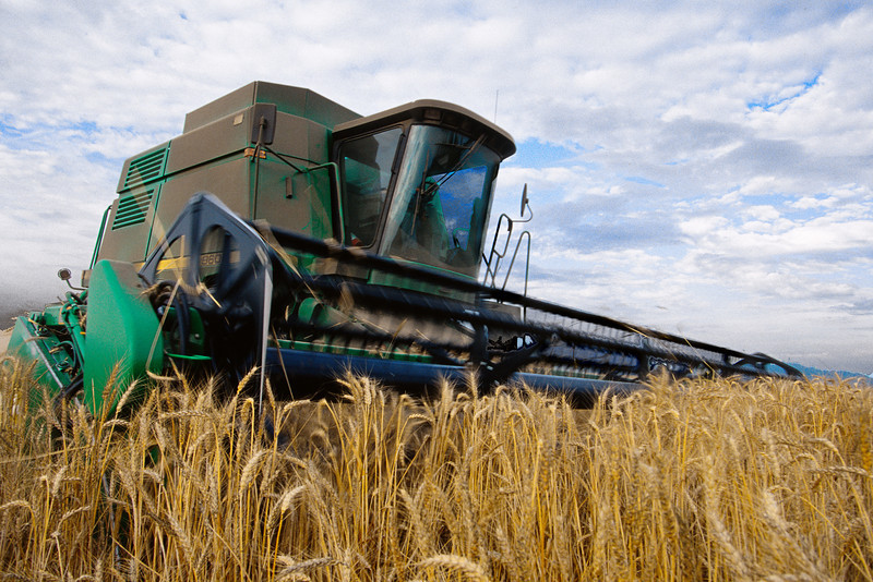 Harvesting wheat in Skagit County, WA