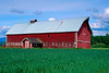 Red barn with green wheat