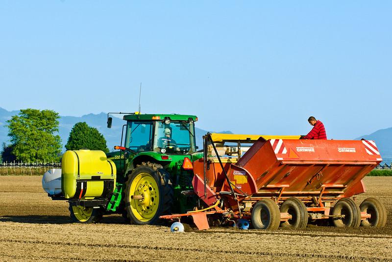 Planting potatoes in Skagit County, WA