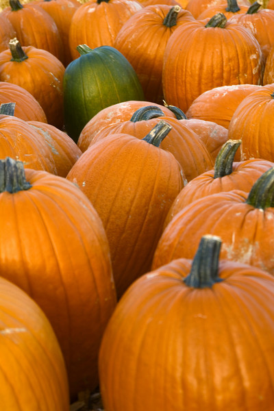 Harvested pumpkins ready for sale