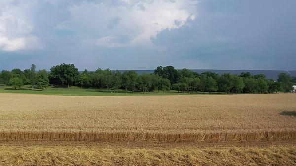 2020 Wheat Harvest
