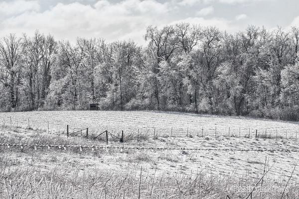 Icy Scene
