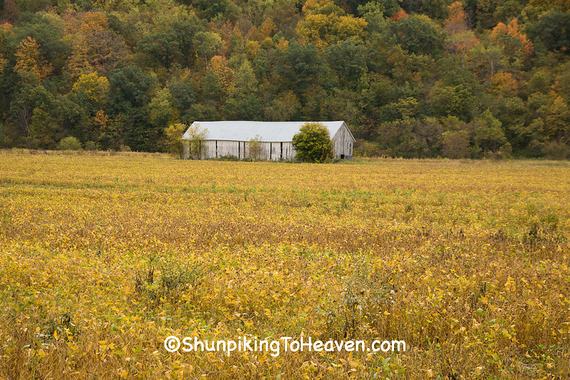 Abandoned Tobacco Barn and Soybean Field, Vernon County, Wisconsin