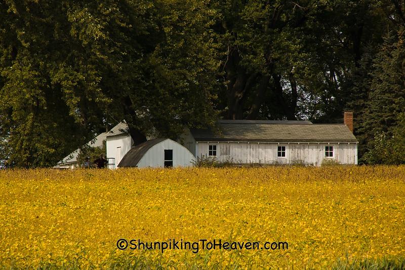 Farm with Soybean Field, Chickasaw County, Iowa