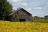 Tobacco Barn and Soybean Field, Dane County, Wisconsin