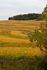 Soybean Patchwork, Vernon County, Wisconsin