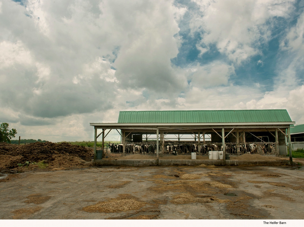 The Heifer Barn