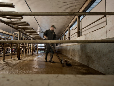Cleaning The Milking Parlour
