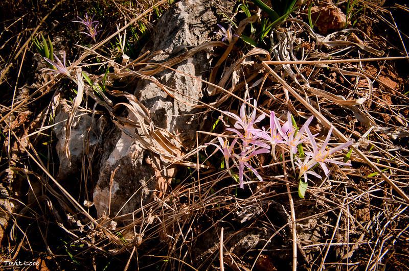 This autumn flower awaits identification....