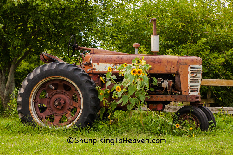 Vintage Farmall Tractor and Sunflowers, Rock County, Wisconsin
