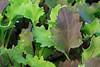 IMG_2877Firebaugh Mixed Greens