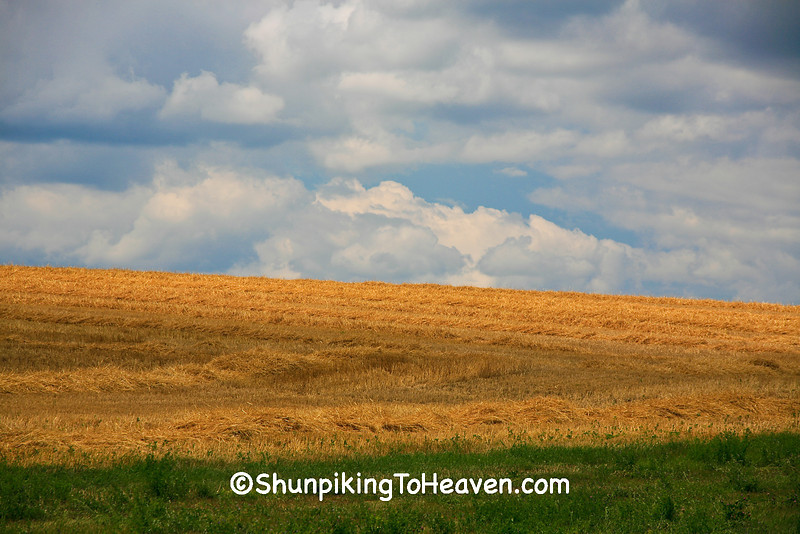 Wheat Field at Harvest Time, Columbia County, Wisconsin