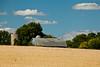 Wisconsin Wheat Field, Dane County, Wisconsin
