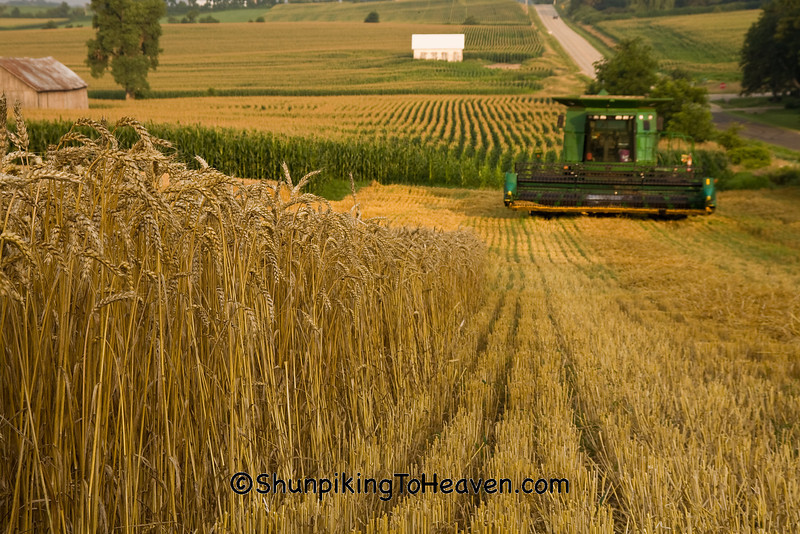Wheat Harvest, Dane County, Wisconsin