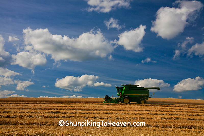 The Wheat Harvest, Dane County, Wisconsin