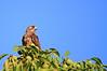 IMG_8601MaleaAndFemaleBluebird
