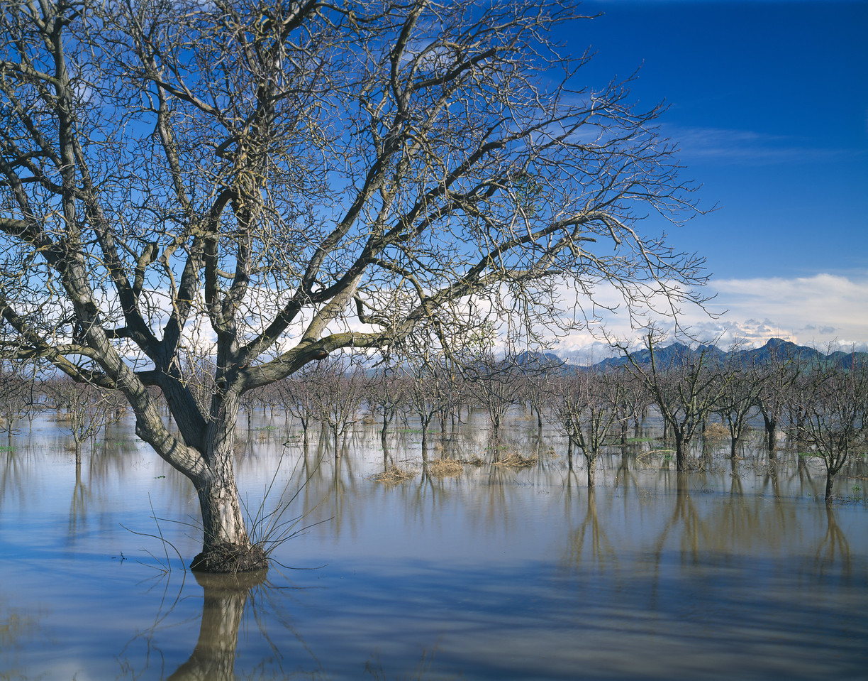 Orchard, Colusa County, California, 1995