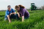 12019-Agriculture-farm-8644
