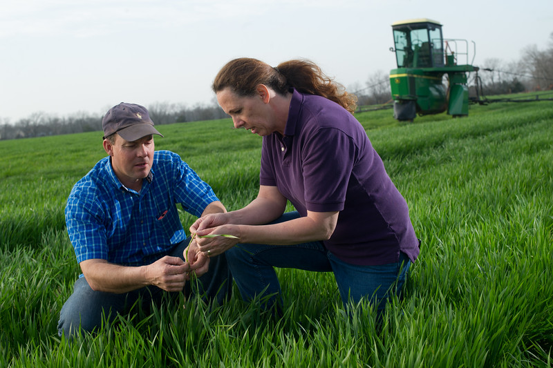 12019-Agriculture-farm-8611