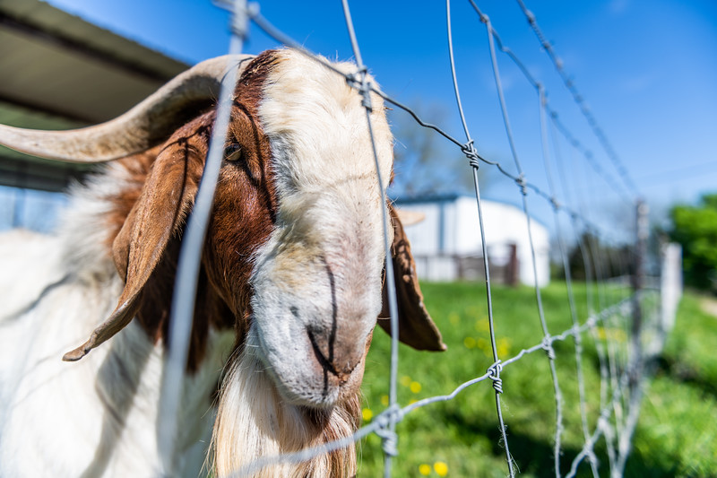 M21064- Ag Farm Animals -7916