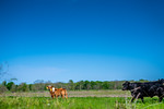 M21064- Ag Farm Animals -7683